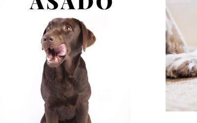 ¡Cuidado!  7 alimentos que no debes dar a tu perro