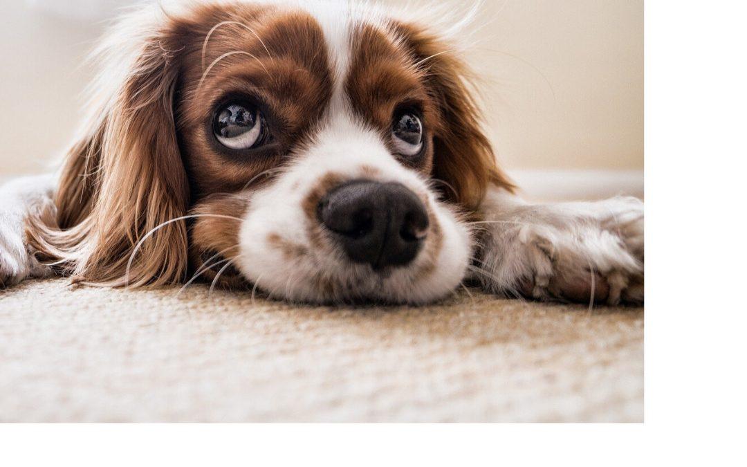 ¿ Tu Perro está Aburrido ? 🤔