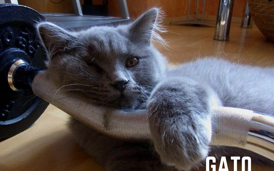 Educar a tu Gato