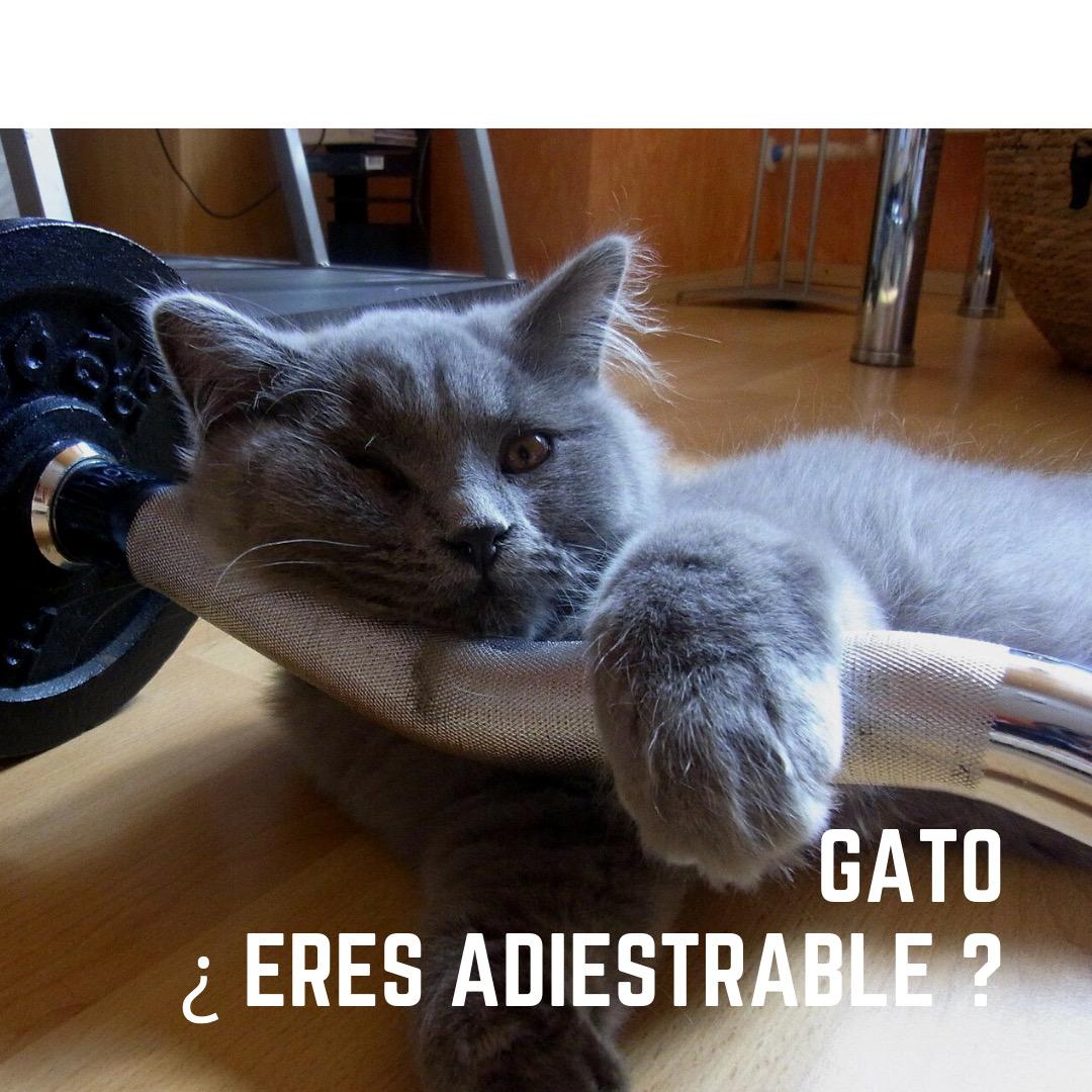 se puede educar a un gato ?