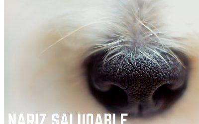 ¿Qué saber sobre la nariz de los perros?